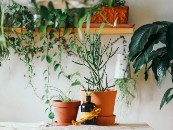 Die perfekte Pflanze für jedes Zimmer